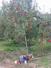 画像 106りんご2