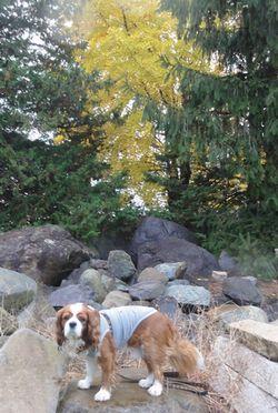 画像 107銀杏の木