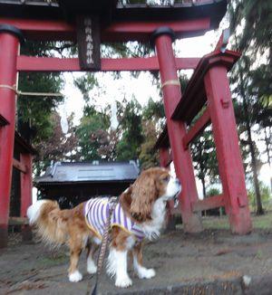 画像 106神社