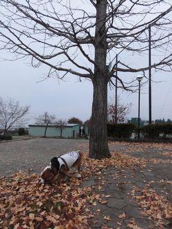 画像 106銀杏の木