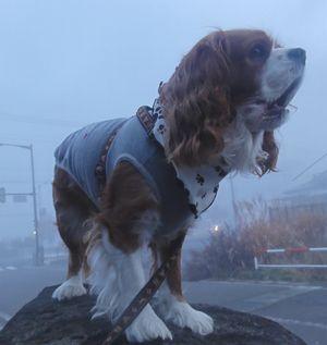 画像 105朝霧