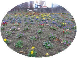 画像 108花壇1