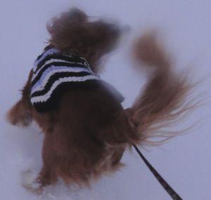 画像 110雪原5