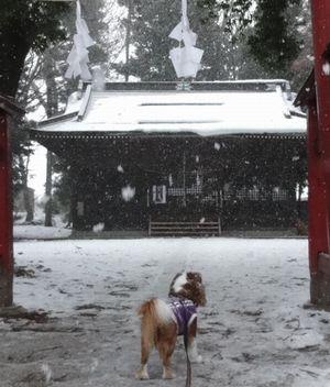 画像 123神社