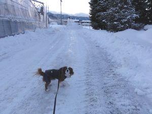 DSC04257雪道