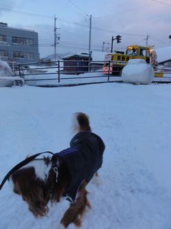 DSC04264歩道除雪