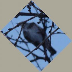 画像 139小鳥