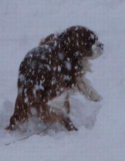 画像 141雪片付け