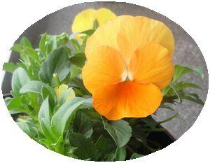 画像 145花鉢
