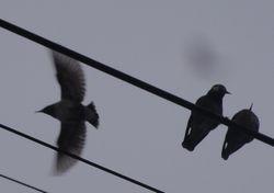 画像 136小鳥