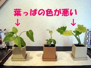 植物 009