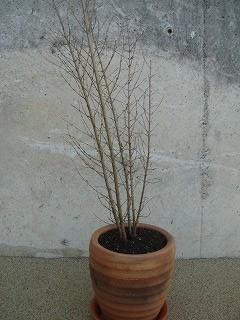 植物 004