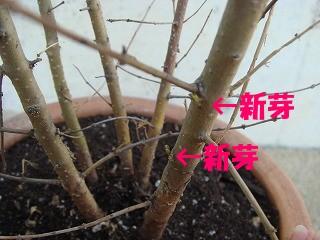 植物 007