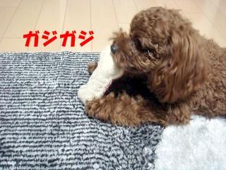 おもちゃ (3)