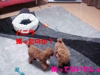 おもちゃ (11)