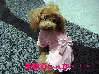 洋服 (4)