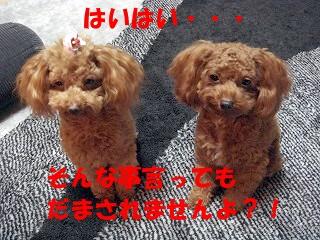 チョコ (4)