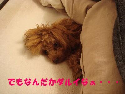 二度寝 (3)