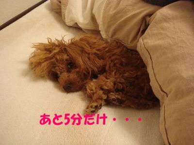 二度寝 (2)