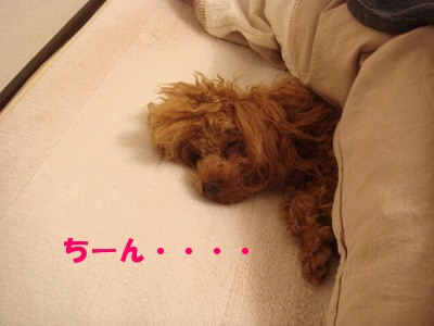 二度寝 (4)