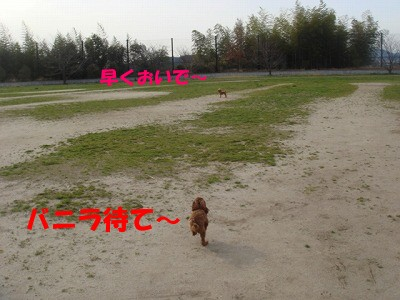 公園 (13)