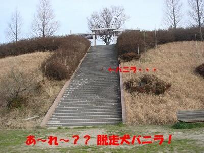 公園 (14)