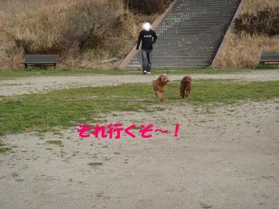 公園 (16)
