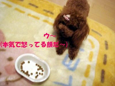 ご飯 (3)