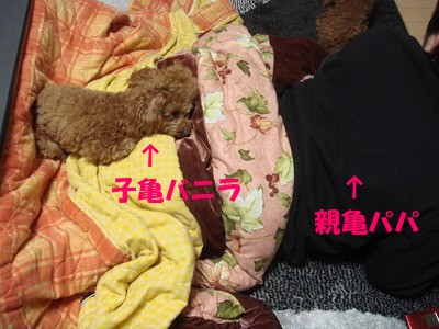 亀 (5)