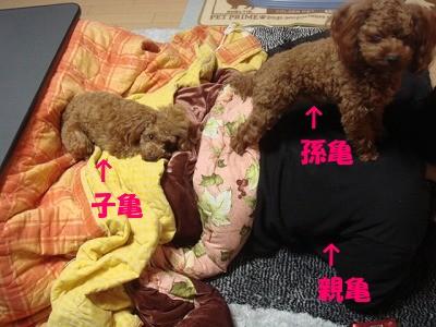 亀 (4)