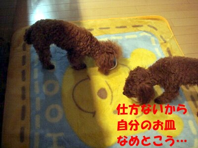 ごはん (3)