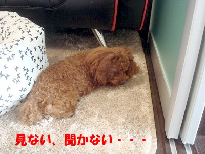 寝たふり (2)