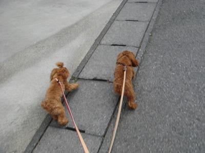 お散歩 016
