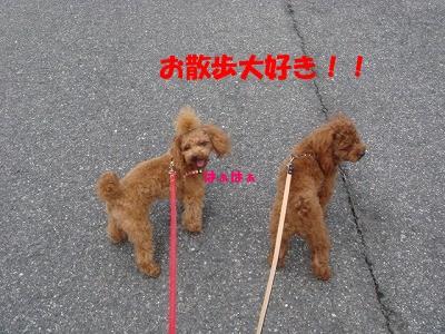 お散歩 020