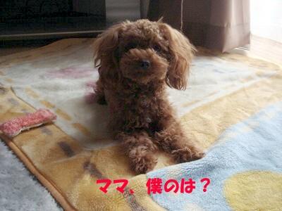 横着 (7)