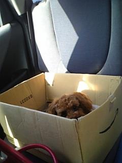 捨て犬 002
