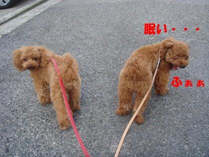 お散歩 006