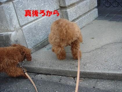 お散歩 009