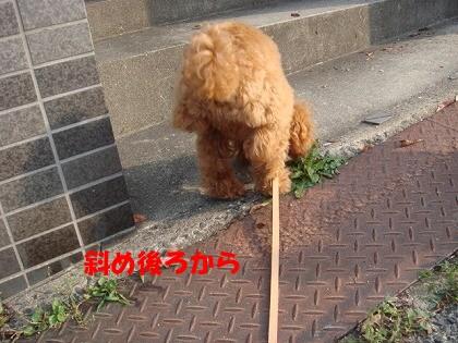 お散歩 002