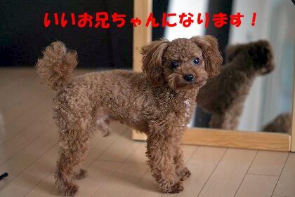 長男 (2)