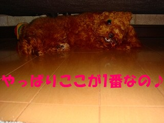 DSC03841s54-.jpg