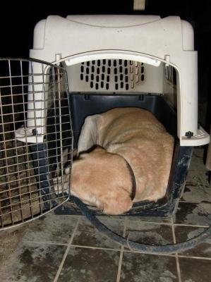 眠る愛犬ジョーダン