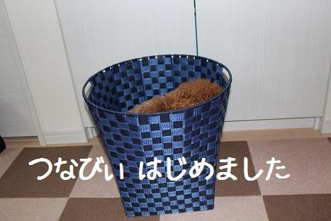 つなびぃ5