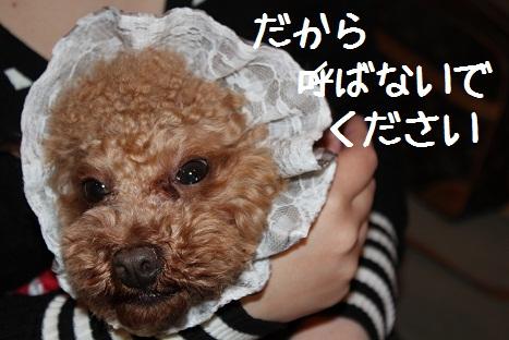 しゅしゅ6