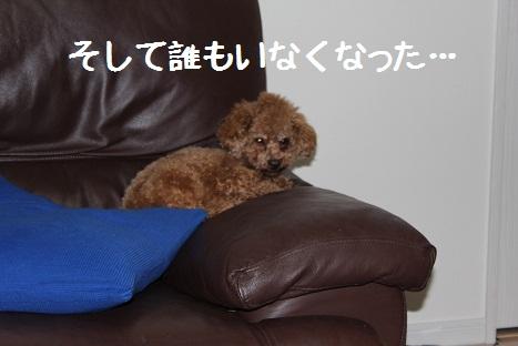 ぱずる13