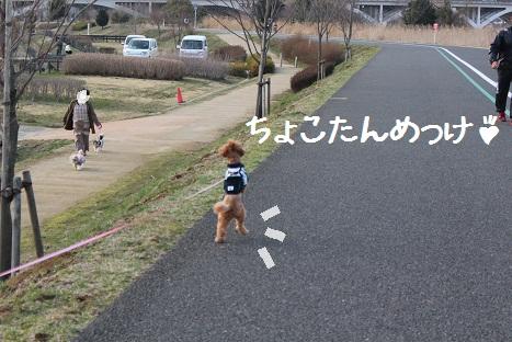 ミーやキャット4