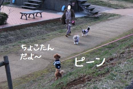 ミーやキャット6