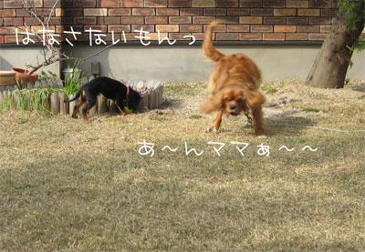 niwa7.jpg