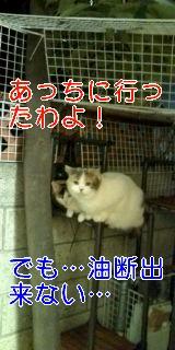 20090612220252_0001.jpg