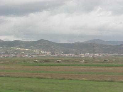 alba (78)